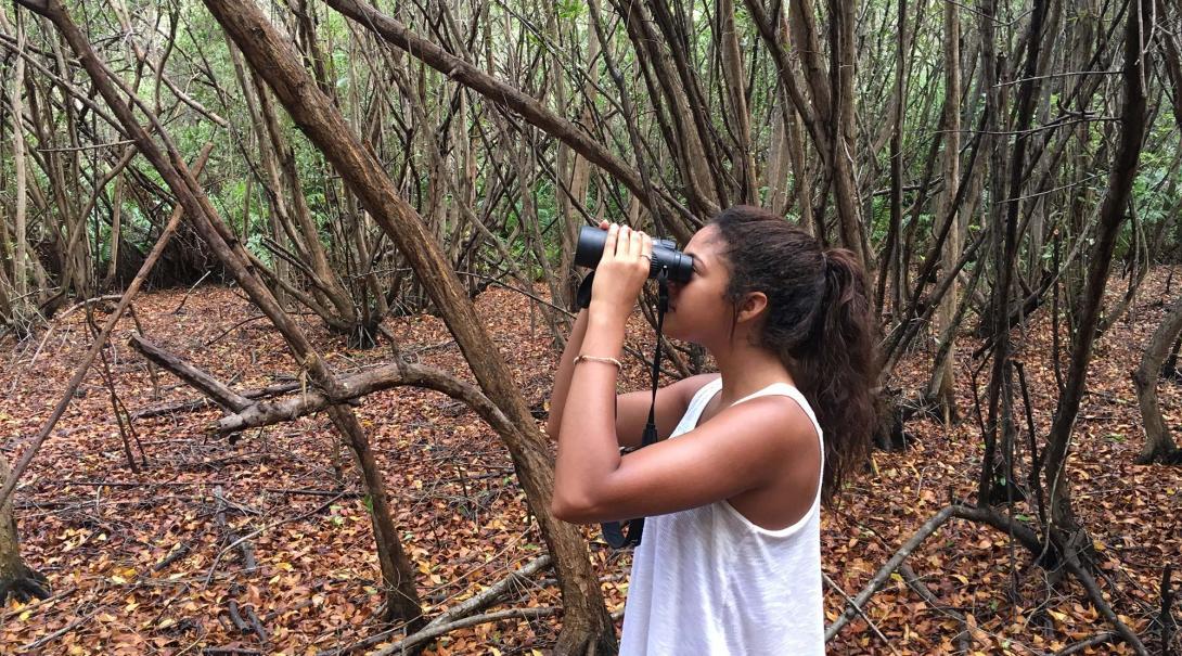 En Projects Abroad naturskyddsvolontär i Mexiko inventerar fåglar som en del av naturskyddsarbetet på sköldpaddsprojektet.
